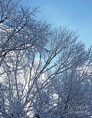 Photograph - Snow Day 13 by Lizi Beard-Ward