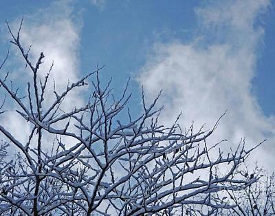 Photograph - Snow Day 14 by Lizi Beard-Ward