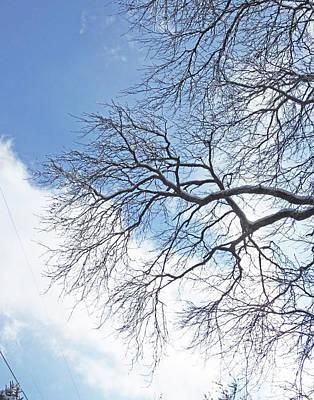 Photograph - Snow Day 15 by Lizi Beard-Ward