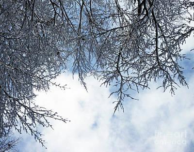 Photograph - Snow Day 16 by Lizi Beard-Ward
