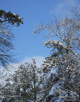Photograph - Snow Day 17 by Lizi Beard-Ward