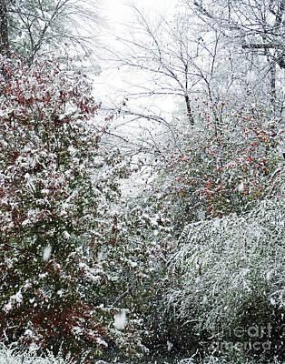 Photograph - Snow Day 2 by Lizi Beard-Ward