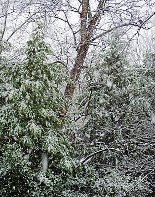 Photograph - Snow Day 4 by Lizi Beard-Ward