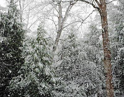 Photograph - Snow Day 5 by Lizi Beard-Ward