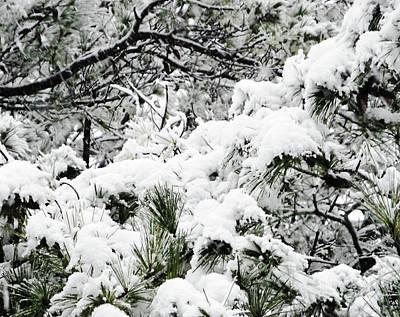 Photograph - Snow Day 7 by Lizi Beard-Ward