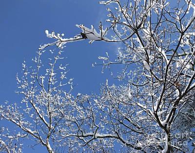 Photograph - Snow Day 8 by Lizi Beard-Ward