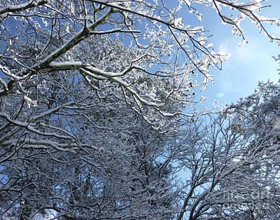 Photograph - Snow Day 9 by Lizi Beard-Ward