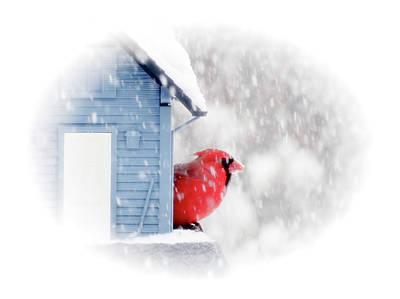 Photograph - Snow Day Cardinal by MTBobbins Photography