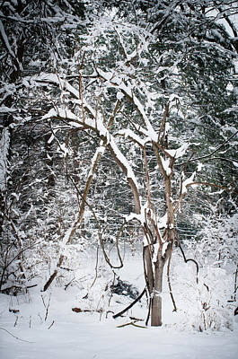Photograph - Snow Day 2, Fieldwork, Hunter Hill, Hagerstown, Maryland, March 21 by James Oppenheim