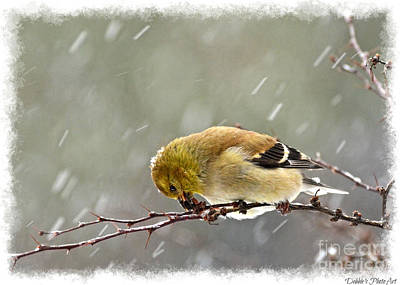 Photograph - Snow Day Goldfinch by Debbie Portwood