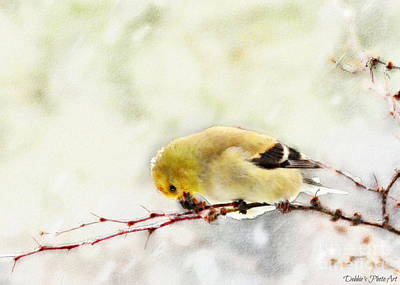 Photograph - Snow Day Goldfinch  Digital Paint 1 by Debbie Portwood
