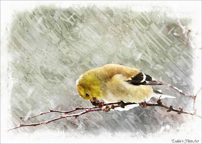 Photograph - Snow Day Goldfinch  Digital Paint 3 by Debbie Portwood