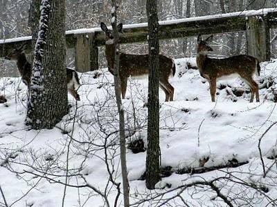 Snow Deer - Rock Creek Park Washington Dc Art Print