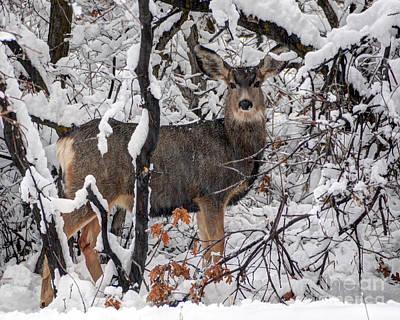 Safari - Snow Deer - Wasatch Front - Utah by Gary Whitton