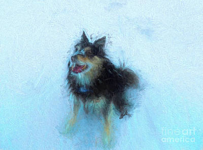 Photograph - Snow Dog  by Claire Bull