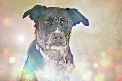 Photograph - Snow Dog by Tara Turner