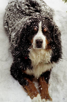 Photograph - Snow Dog by Wayne King