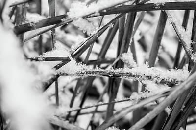 Photograph - Snow Down by Tyson Kinnison