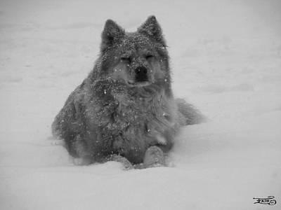 Photograph - Snow Dreams by Alana  Schmitt