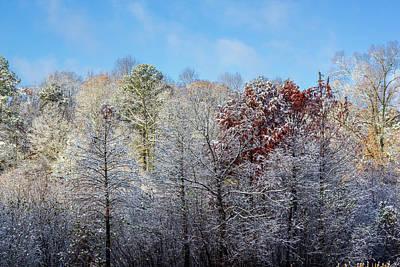Photograph - Snow Dust by Randy Bayne