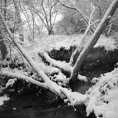 Photograph - Snow Dusted Banks by Paul Davenport