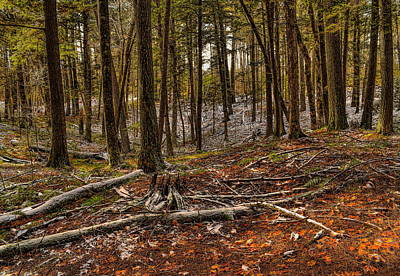 Photograph - Snow Dusted Pine Woods by Dale Kauzlaric