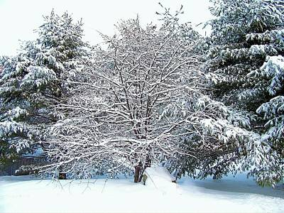 Photograph - Snow Dusted Trees by Lisa Gilliam