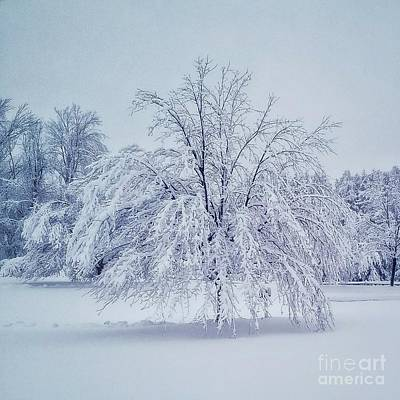 Photograph - Snow Encrusted Tree by Mary Capriole