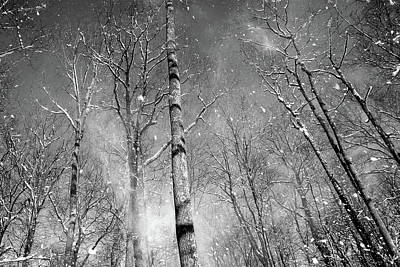 Photograph - Snow Fall by Dawn J Benko