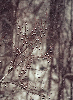 Photograph - Snow Falling On Sycamore by Dana Sohr