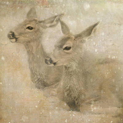 Snow Fawns Art Print