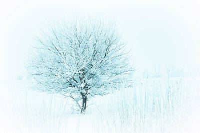 Photograph - Snow Field Tree by Troy Stapek