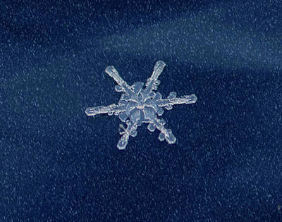 Photograph - Snow Flake  by Betty Pauwels