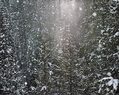 Photograph - Snow Flakes by Leland D Howard