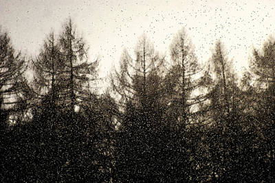 Photograph - Snow Flakes by Michael Mogensen