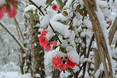 Ally Photograph - Snow Flowers by Ally White