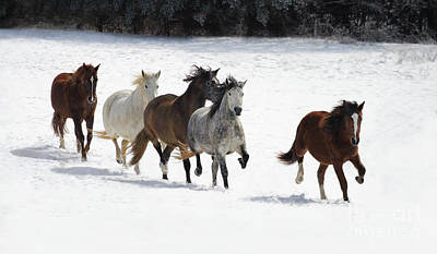 Photograph - Snow Gallop by Art Cole