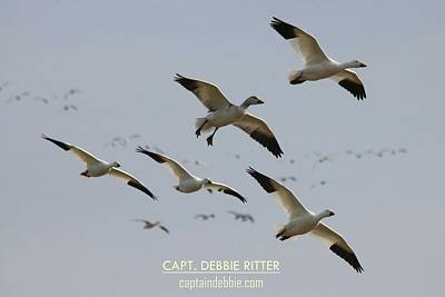 Photograph - Snow Geese 5763 by Captain Debbie Ritter
