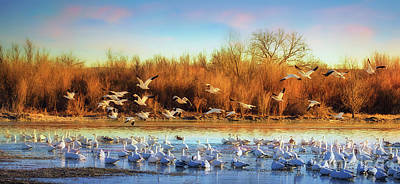 Mountain Landscape Royalty Free Images - Snow Geese Flyout Royalty-Free Image by Priscilla Burgers