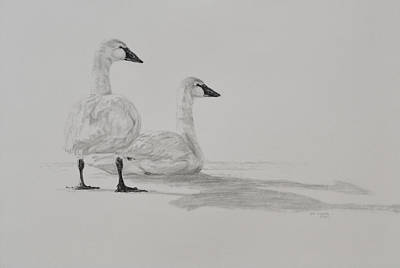 Snow Geese Drawing - Snow Geese by Jim Young