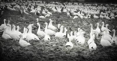 So It Goes Digital Art - Snow Geese by Lisa Bell
