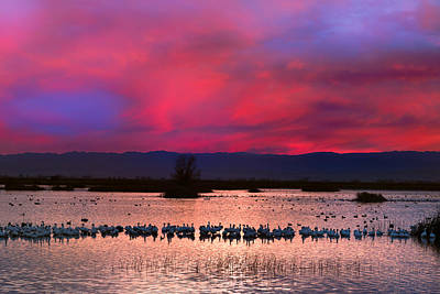 Photograph - Snow Geese Sunset by Kathleen Bishop