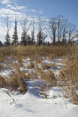Photograph - Snow Grass Lineup by Dylan Punke