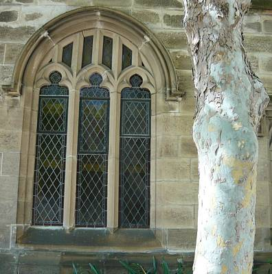 Snow Gum And St Andrews Cathedral Art Print by Adrianne Wood