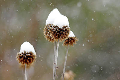 Photograph - Snow Hats by Debbie Oppermann