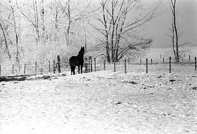 Photograph - Snow Horse by William Kimble