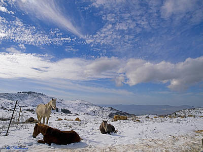 Israel Photograph - Snow Horses by Arik Baltinester