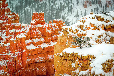 Photograph - Snow In Bryce Canyon by Joe Doherty
