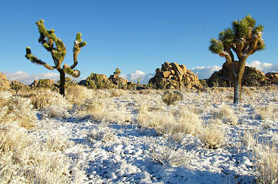 Photograph - Snow In Joshua Tree National Park by Connie Cooper-Edwards
