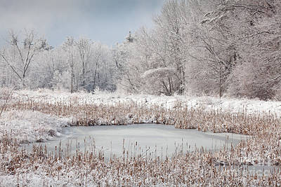 Snow In The Air Art Print by Susan Cole Kelly